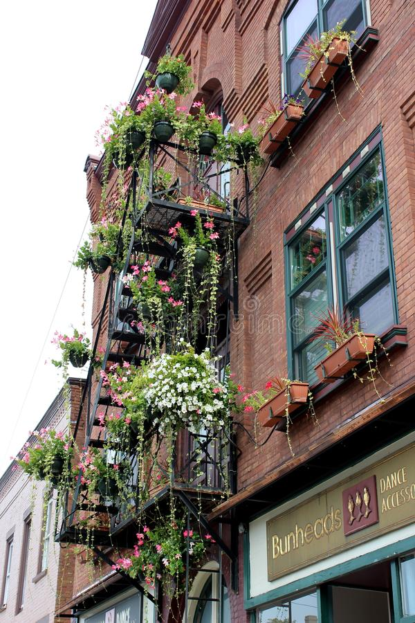 Gorgeous garden flowers in pots, draped over fire escape, downtown business area, Saratoga Springs, New York, 2018 stock photo
