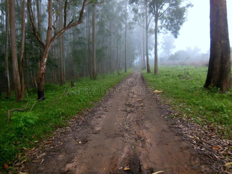 Beautiful Waynad. Wayanad District is a district in the north-east of Kerala state, India with headquarters at the town of Kalpetta. Mananthavady is the largest royalty free stock photo