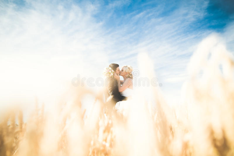 Beautiful wedding couple, bride and groom posing on wheat field with blue sky stock photo