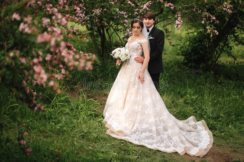 Beautiful wedding couple walking in the park. Bride with long white dress and stylish groom. Pink tree stock images