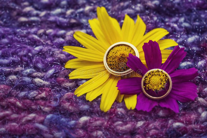 Beautiful wedding golden rings on a yellow and purple flower on royalty free stock photo