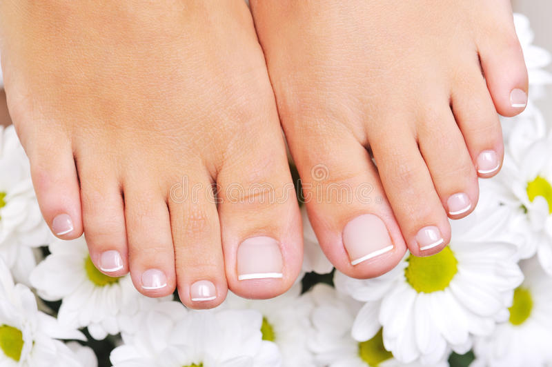 Download Beautiful Well-groomed Female Feet Stock Photo - Image of feet, flower: 13110892
