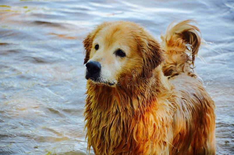 Beautiful wet dog in summer stock photos
