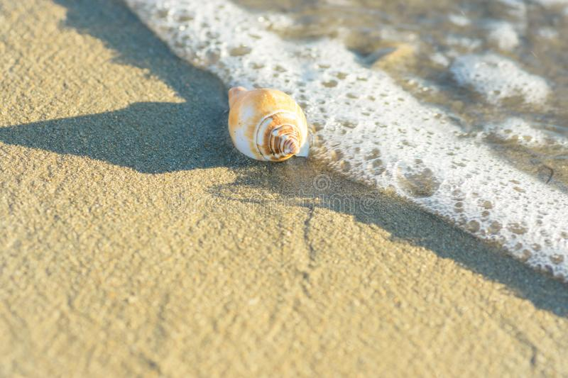 Beautiful White Beige Spiral Sea Shell on Beach Sand Washed by Foamy Wave. Transparent Water. Golden Sunlight Soft Pastel Colors stock image