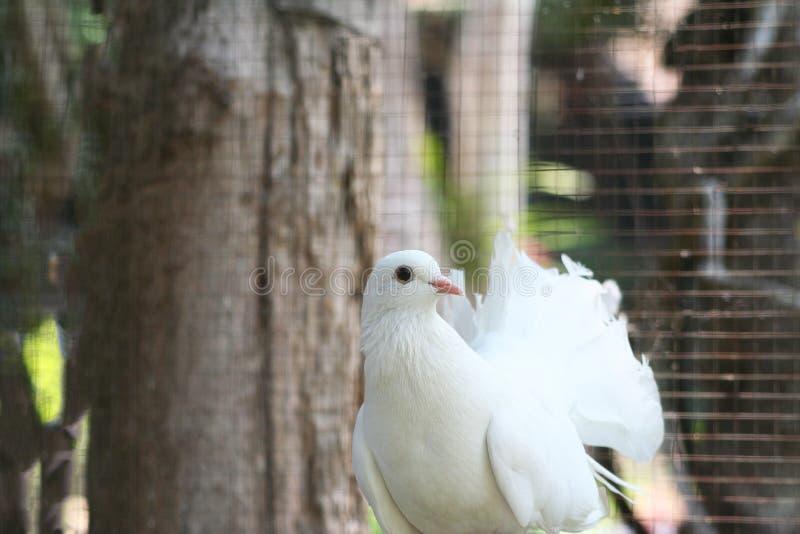 Beautiful white bird. Close up beautiful white bird stock image