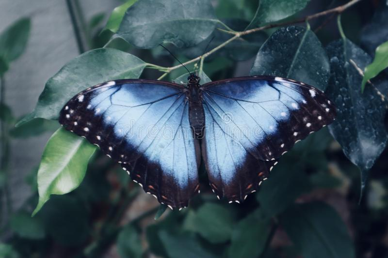Beautiful white blue and black butterfly on yellow flowerr close up background royalty free stock photography