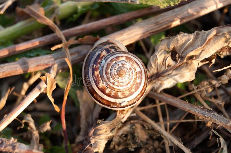 Beautiful white and brown snail on the ground stock photo