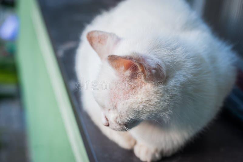 Beautiful white cat sitting on the window stock photos
