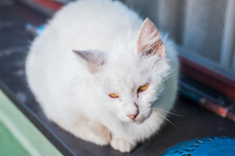 Beautiful white cat sitting on the window stock images