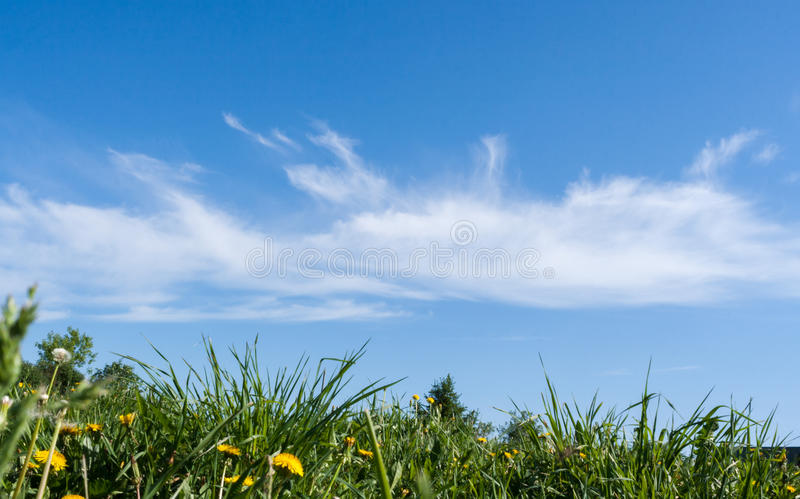 Beautiful white clouds on blue sky over green grass in summer. royalty free stock images