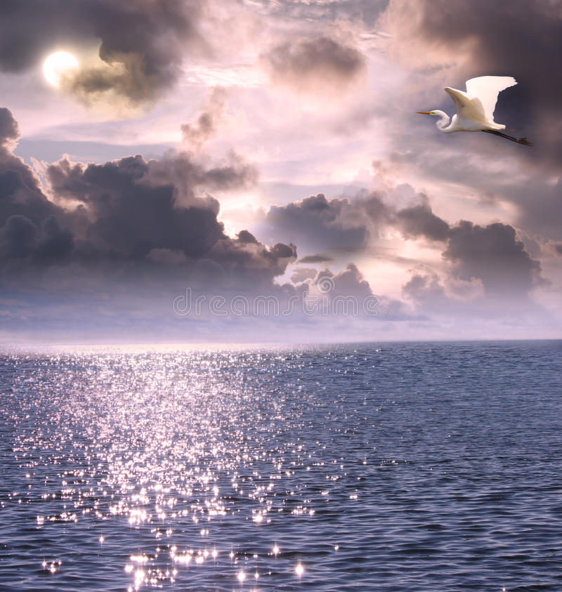 Beautiful white egret flying over the ocean stock images