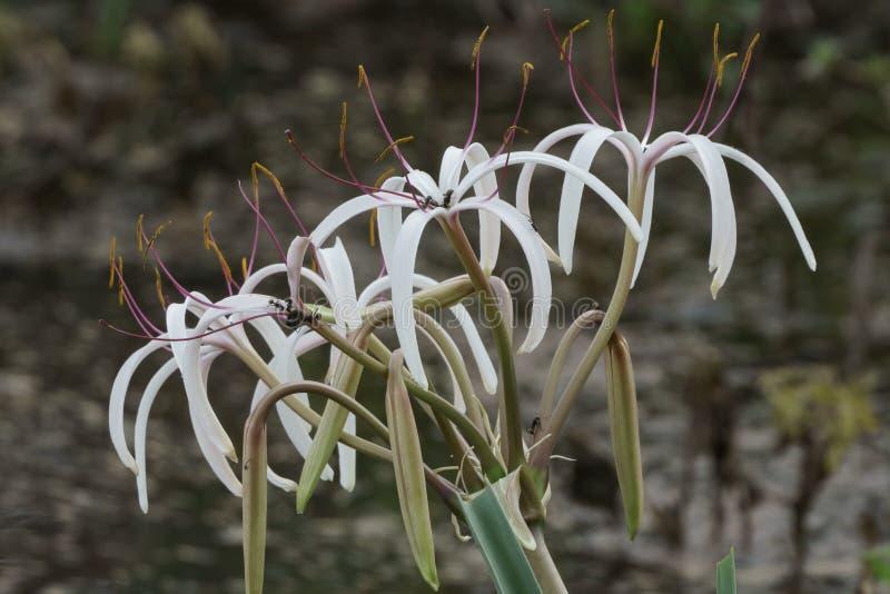 Beautiful white flower close up shot royalty free stock photography