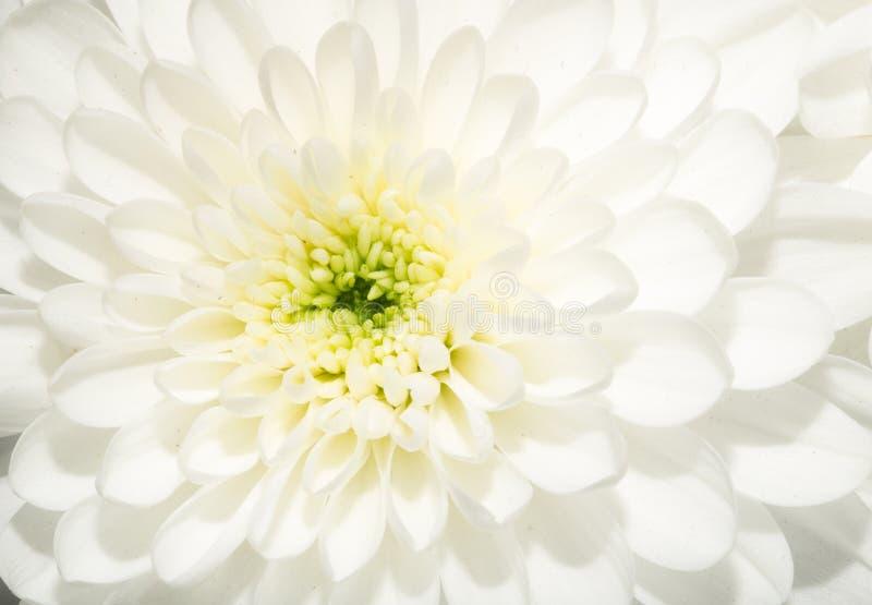 Beautiful white flower stock image