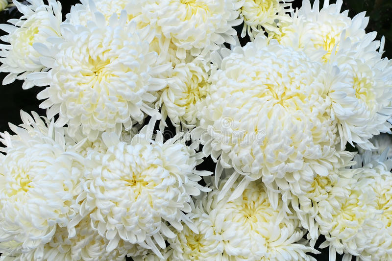Beautiful white flowers - closeup stock photos