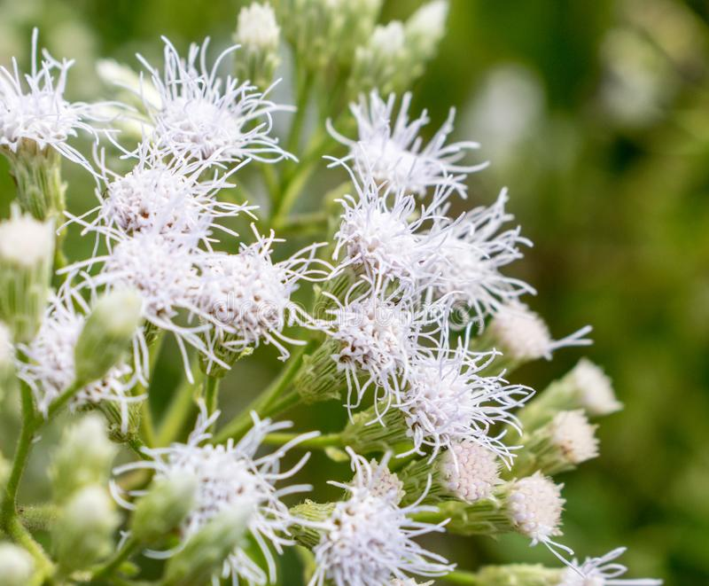 Beautiful White flowers, green nature, blurry background, close up stock image