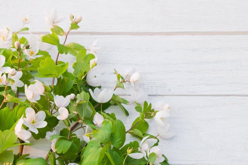 BeautifulwhiteforestflowersIsopyrumthalictroidesonawhitewoodenstół zdjęcia stock