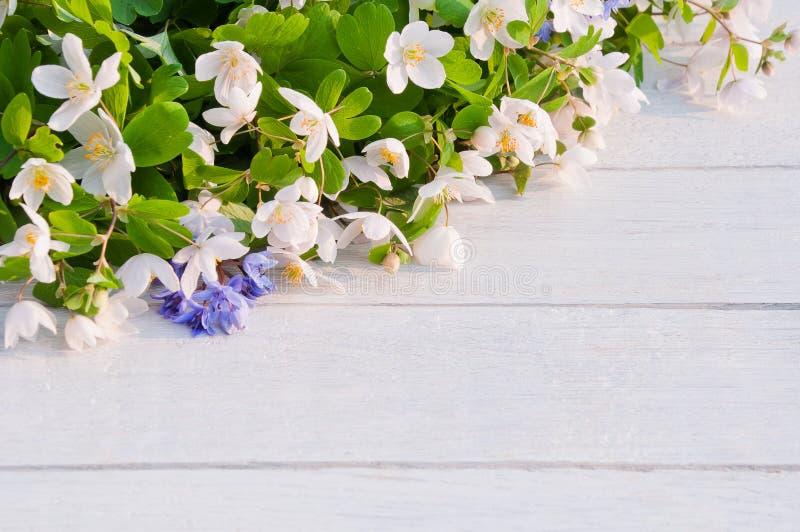BeautifulwhiteforestflowersIsopyrumthalictroidesonawhitewoodenstół zdjęcie royalty free