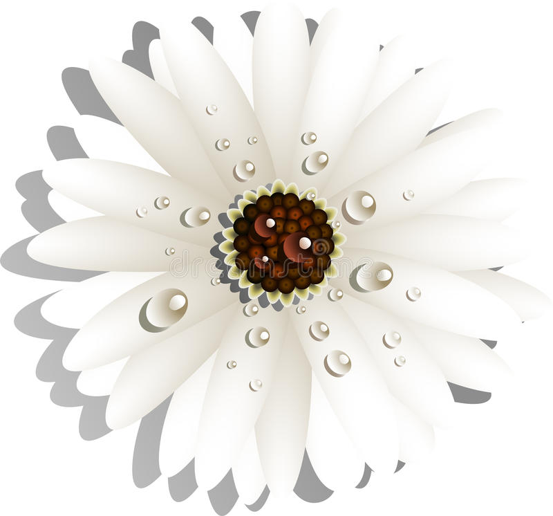 Download Beautiful White Gerber Daisy Stock Vector - Image: 24527535