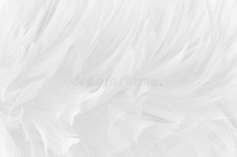 Beautiful white grey bird feathers pattern texture background royalty free stock photography