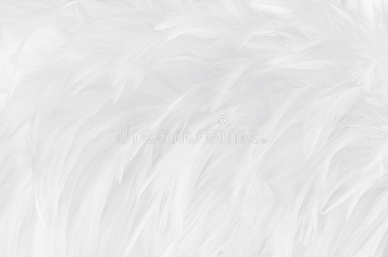 Beautiful white grey bird feathers pattern texture background royalty free stock image