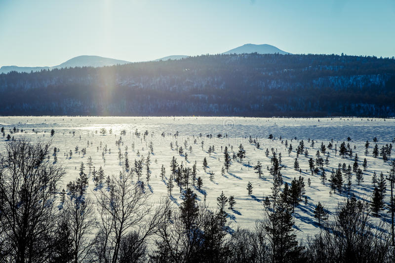 A beautiful white landscape of a frozen swamp with some trees and mountains royalty free stock photography
