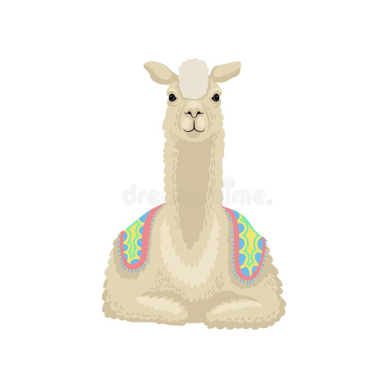 Beautiful white llama alpaca animal lying vector Illustration on a white background. Beautiful white llama alpaca animal lying vector Illustration isolated on a stock illustration