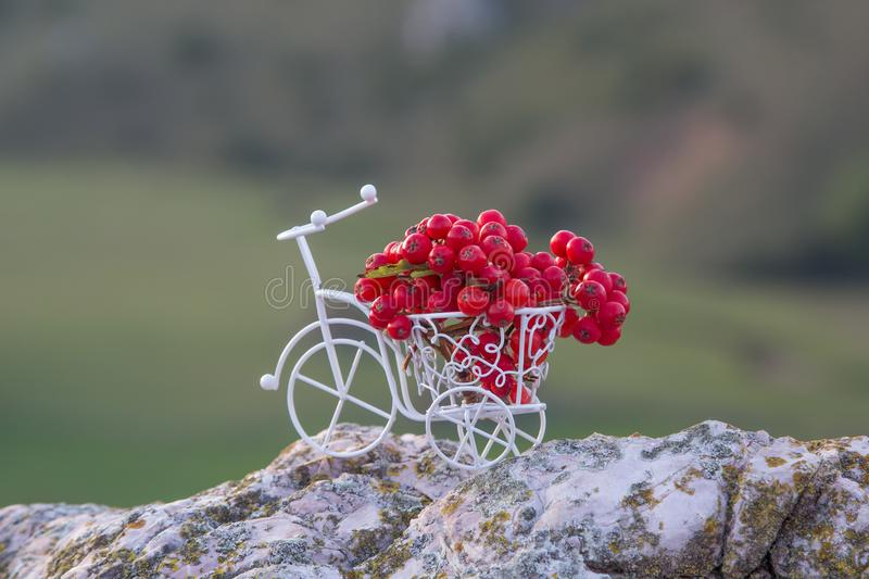 Beautiful white metallic bicycle with wild red berries standing on rocks royalty free stock images