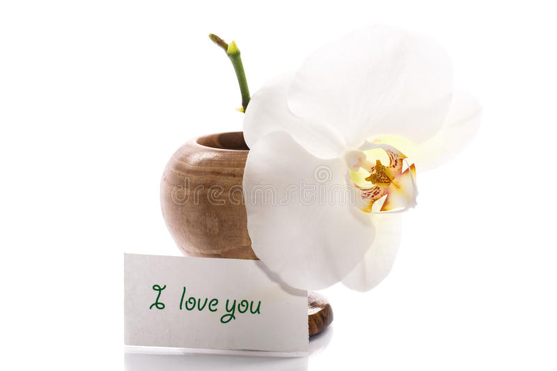 Download Beautiful white orchid stock image. Image of bloom, decoration - 35269475