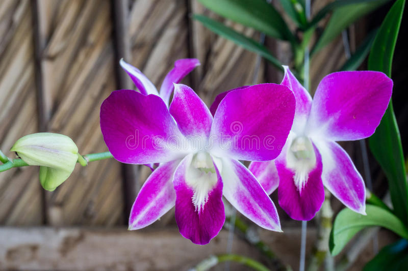 Beautiful white and purple orchids. N royalty free stock photography