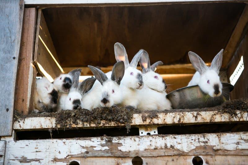 Beautiful white rabbits stock image