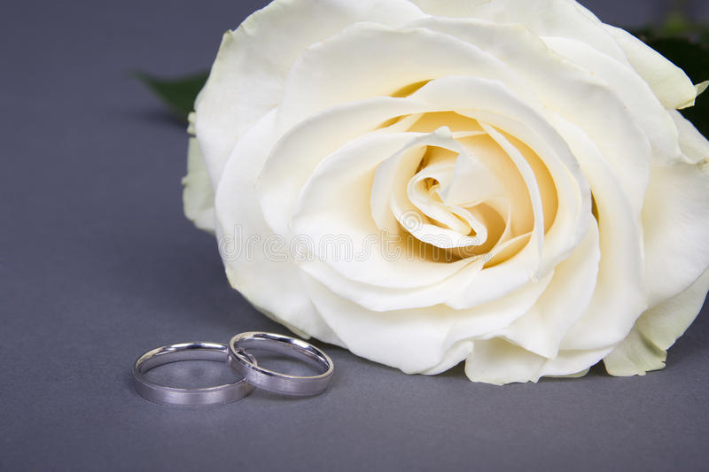 Download Beautiful White Rose Flower And Wedding Rings Over Grey Stock Image