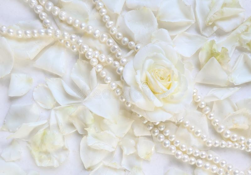 Beautiful white rose with petals and pearl necklace on white background. Ideal for greeting cards for wedding, birthday, Valentine royalty free stock image