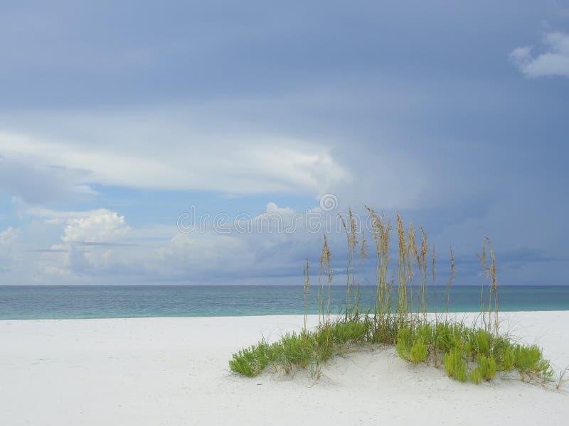 Beautiful White Sand Beach and Sea Oats of the Florida Gulf Coast stock photography