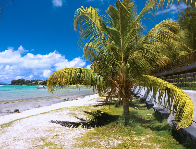 White Sandy Beach Palms, Mauritius Island stock images
