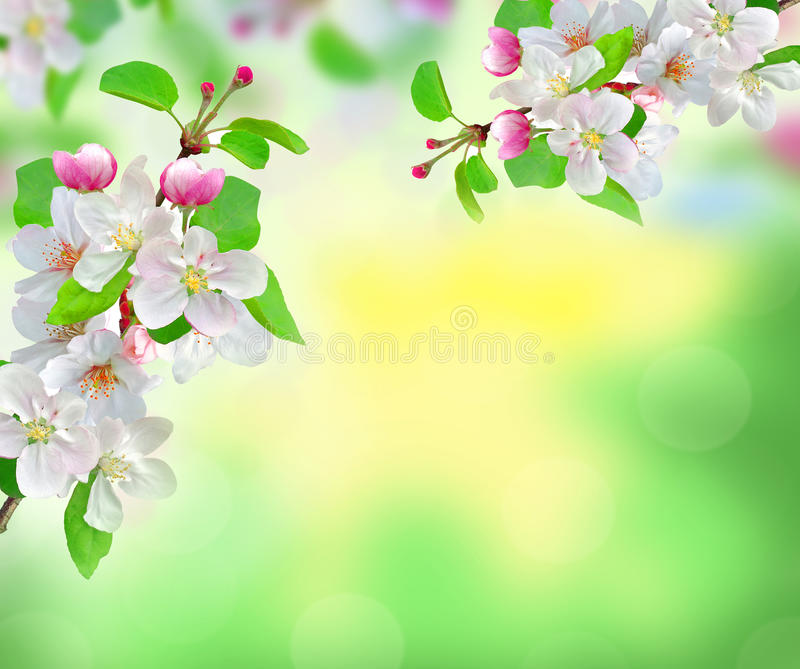 Beautiful white spring blossom on blurred nature background stock download beautiful white spring blossom on blurred nature background stock photo image of bloom voltagebd Image collections