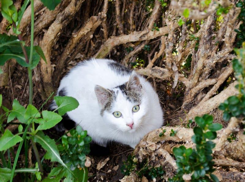 Beautiful white stray cat hiding in a bush stock photos