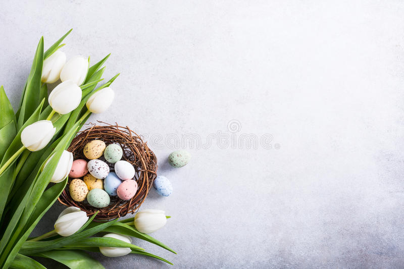 Beautiful white tulips stock photos