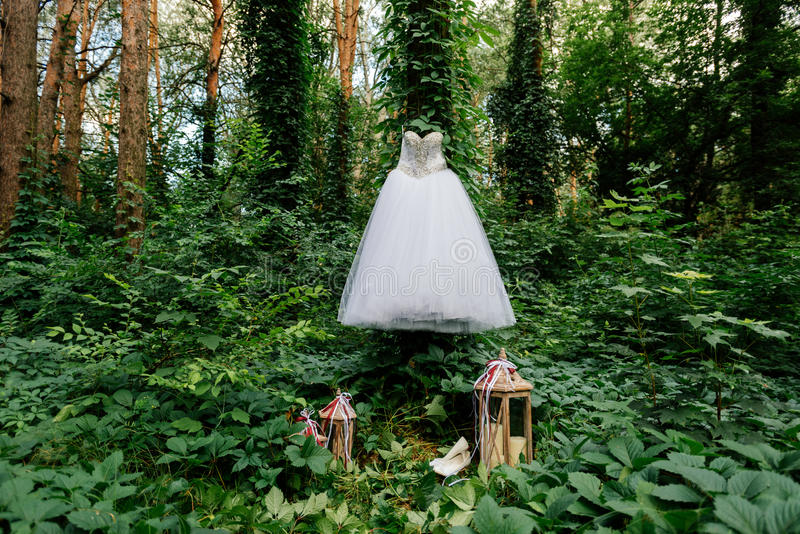 Beautiful white wedding dress hanging on a tree with ivy stock photo