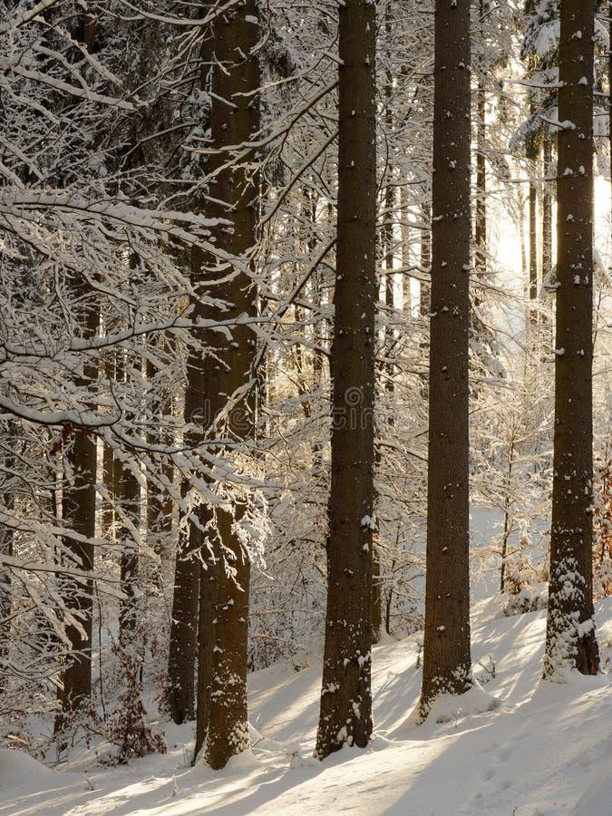 Tree at winter royalty free stock photos