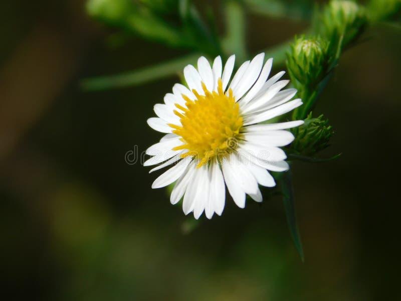Beautiful white and yellow flower stock image