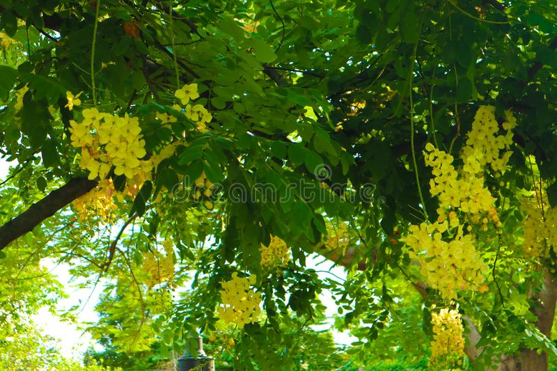 Beautiful white and yellow flowers in summer garden parks background. Beautiful white and yellow flowers in summer public garden parks background and wallpaper royalty free stock images