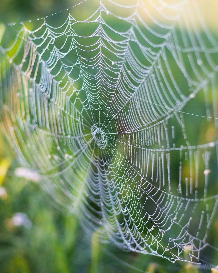 Beautiful wicker web, spider wove a large web of spiderwebs for insect fishing, background royalty free stock images