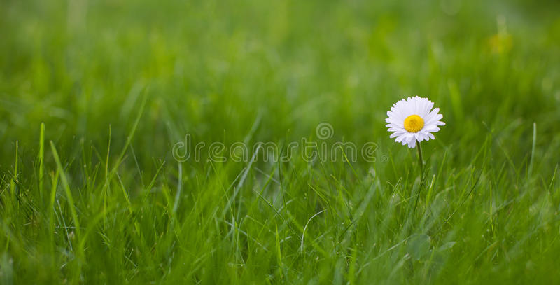 Beautiful Wide Screen Nature Summer Background royalty free stock image