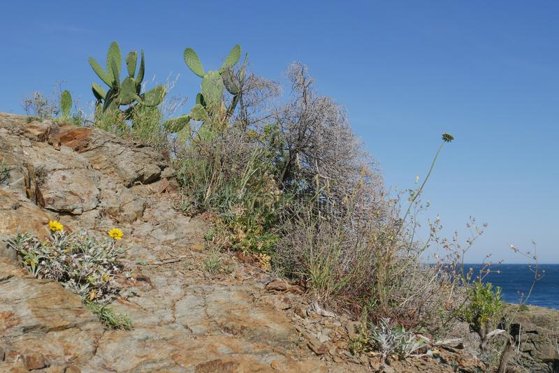 Beautiful wild cactus with blue sea background stock photos