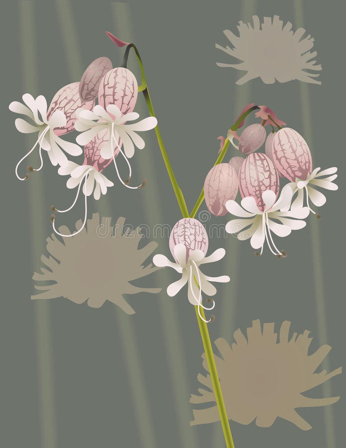 Beautiful Wild Flower. An illustration of a beautiful wild flower, no meshes used royalty free illustration