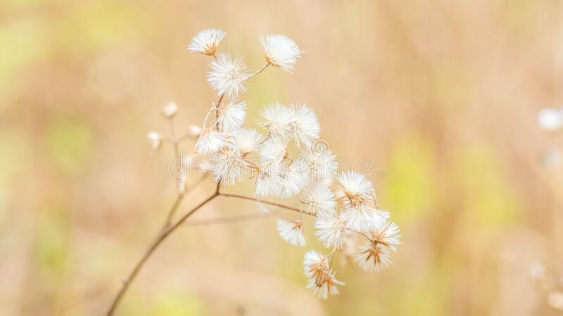 Beautiful wild flower in the meadow. Beautiful wild flower in the meadow with blurred background stock photo