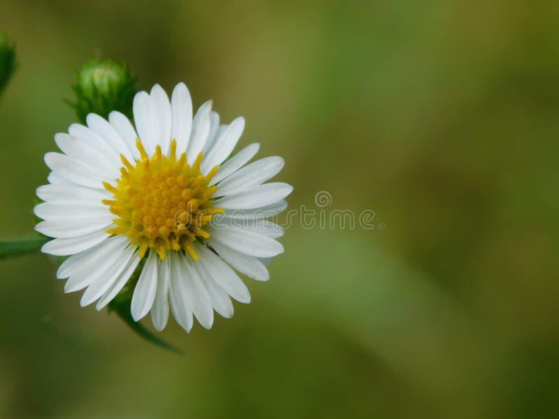 Beautiful wild flower in nature stock photo
