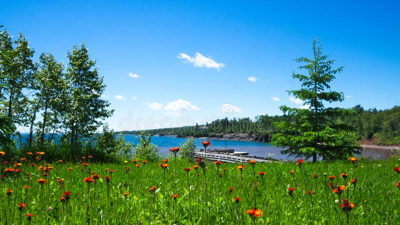 Beautiful wild flowers growing near the north shore of Great Lake Superior. Beautiful wild flowers growing near the north shore of Lake Superior in Minnesota on royalty free stock images