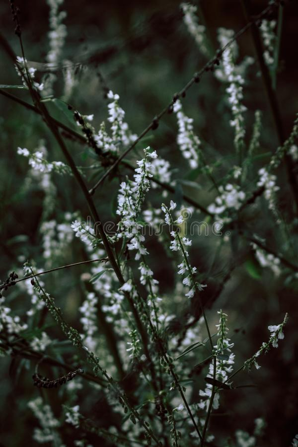 Beautiful wild flowers on nature dark background. stock photography