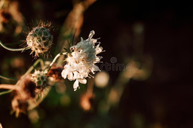 Beautiful wild flowers on nature dark background. stock image